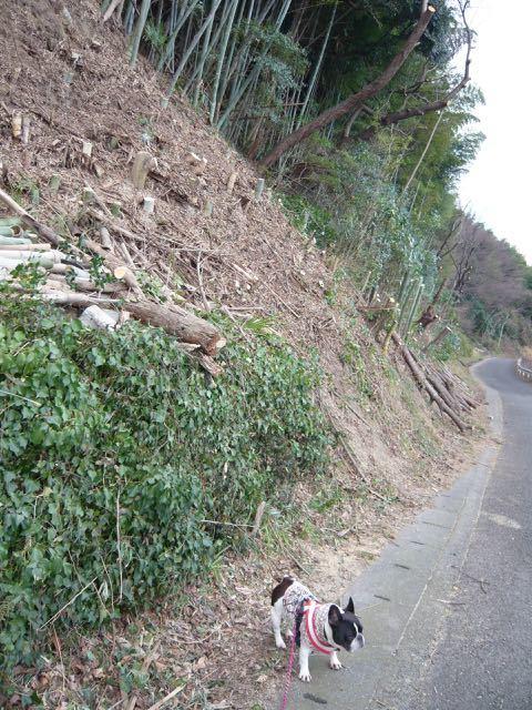 裏山の伐採
