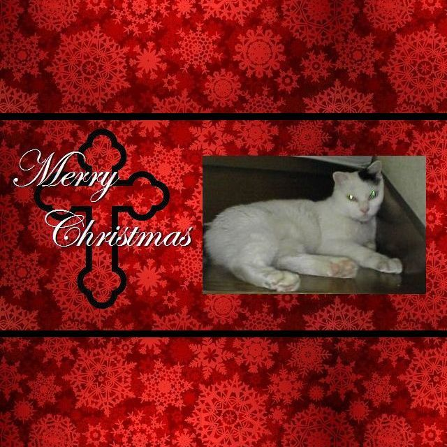 IMG_20161225_PA0_0470 Marl 2016 Christmas 640x640cross