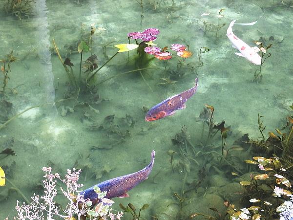 モネの池 ツーリング