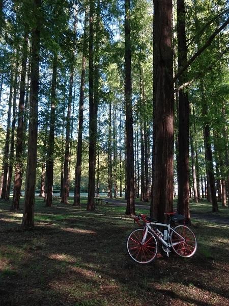 20161112水元公園 (9)