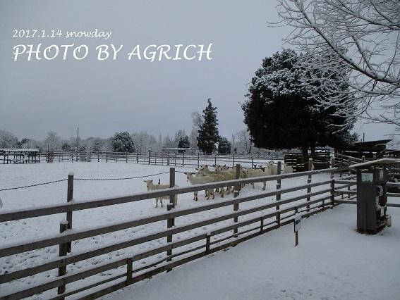 snowgoat1