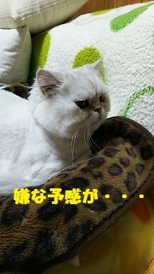 DSC_0001_201701151926060ba.jpg