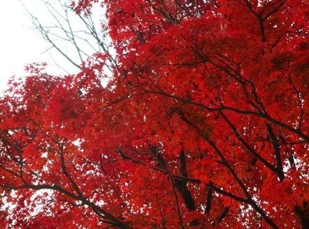 2016.11.15高尾山2