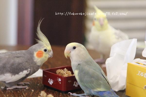 仲良しご飯2 - コピー