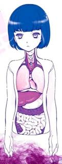 美しい人体模型