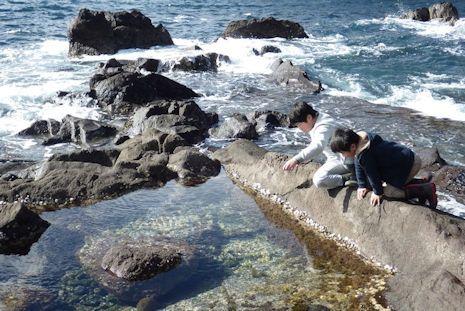 真鶴海岸で磯遊び