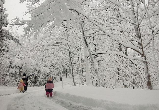 2017.01雪の日散歩