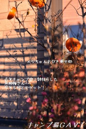 170125_5053.jpg