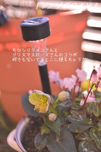 170206_5451.jpg
