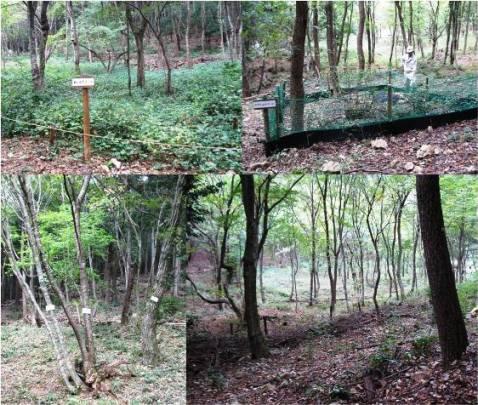 カンチ安食の森・森の様子