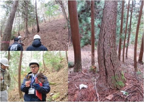 森の通信簿白鳥・森の様子