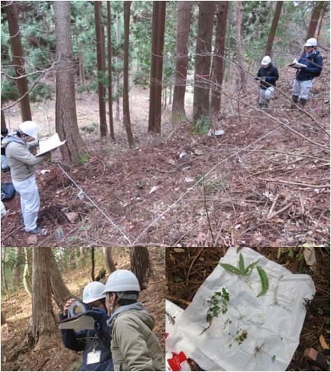 森の通信簿白鳥・調査枠