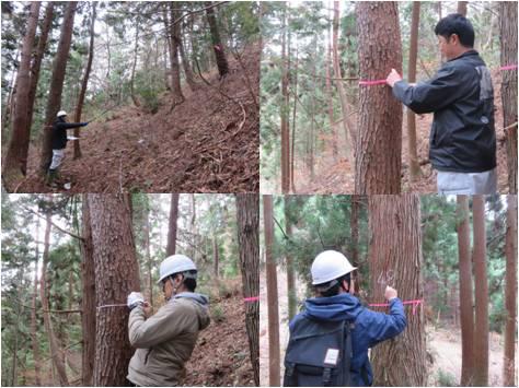 森の通信簿白鳥・木の調査
