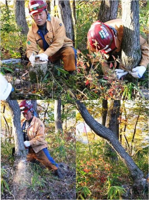 H28安全講習4・伐採
