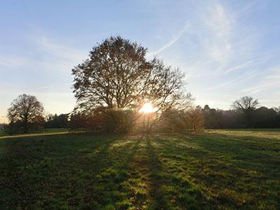 autumnleafs1602.jpg