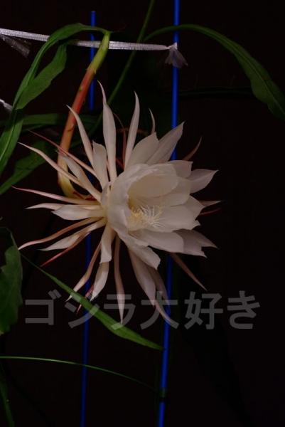 DSCF7602.jpg