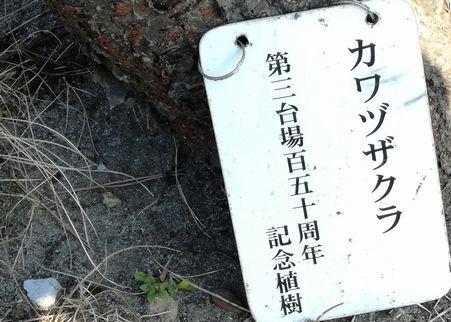 河津桜のプレート