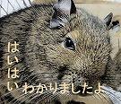 15_20161227210508aab.jpg