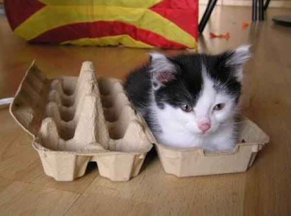 卵から猫が産まれたよ