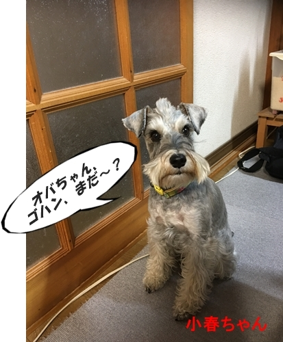 小春ちゃん2017年1月15日