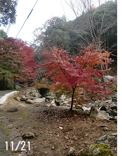 太鼓橋の紅葉