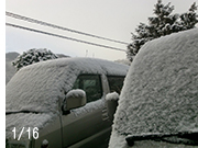よく降った雪