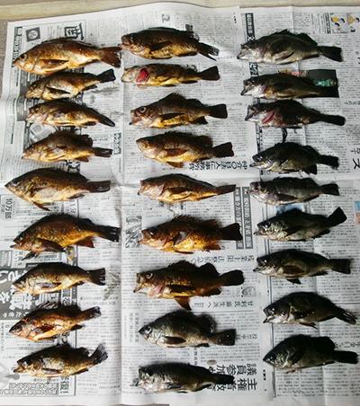 今年初のメバル釣り