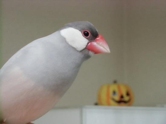 今更ハロウィン~翼~