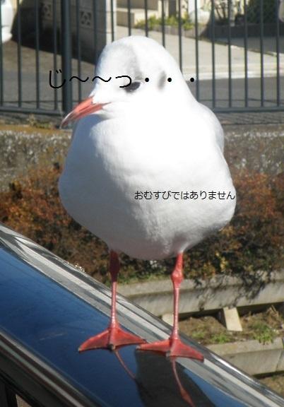omusubi.jpg
