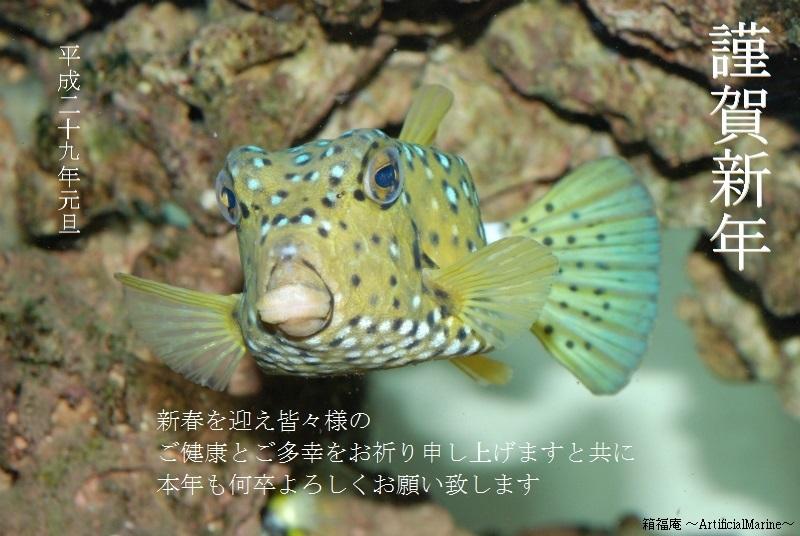 DSC_1663.jpg
