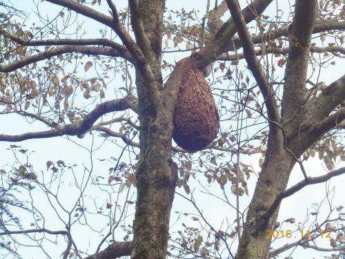 04_スズメバチの巣