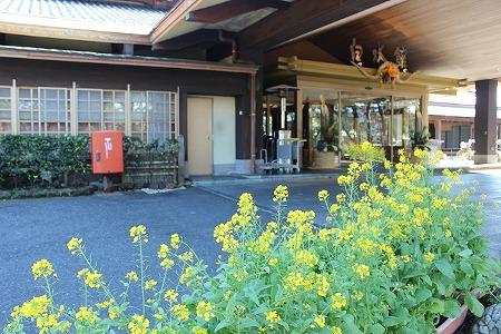 玄関菜の花