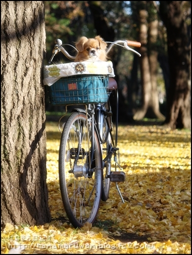 自転車キャリー2