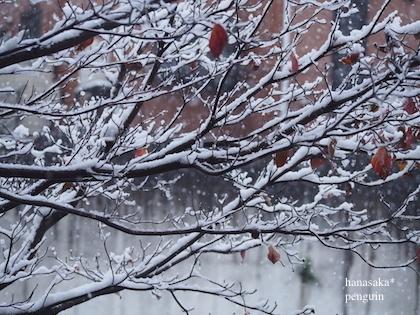 20161124 P02雪