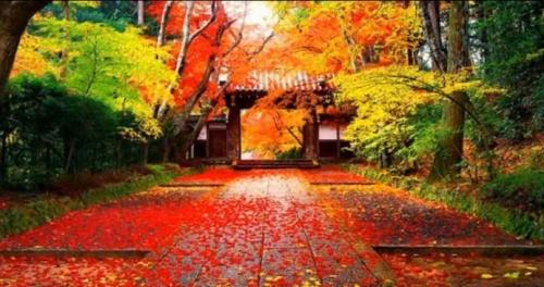 光明寺薬師門