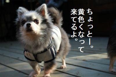 IMG_3875_20161114231940a68.jpg