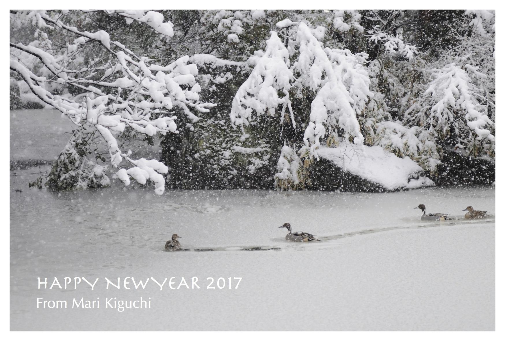 年賀状2017_豪雪の鳥