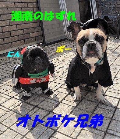 DSC_0032_20170206160408c00.jpg