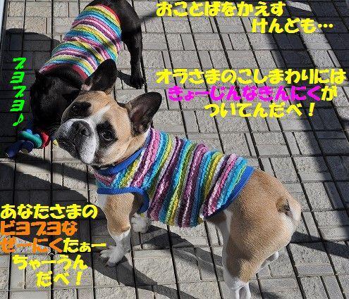 DSC_0044_20161117104629eea.jpg