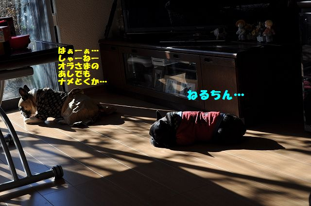 DSC_0062_20170105091843143.jpg