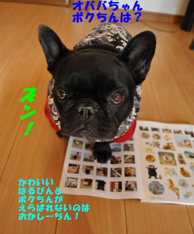 DSC_0089_201701031741484d5.jpg