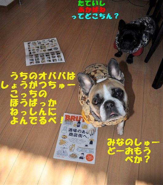 DSC_0095_201701031741506f1.jpg