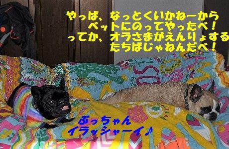 DSC_0140_201701060858368a1.jpg