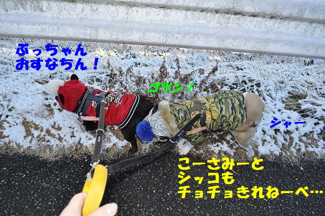 DSC_0301_20170213141255687.jpg