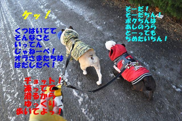 DSC_0309_201702131412578dd.jpg