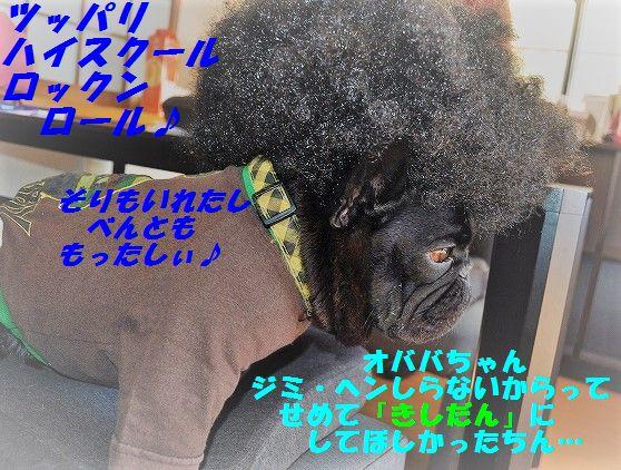DSC_0367_20170214144410c2d.jpg