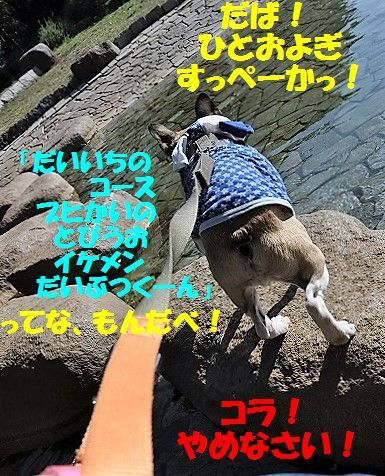 DSC_0460_20161110153517161.jpg