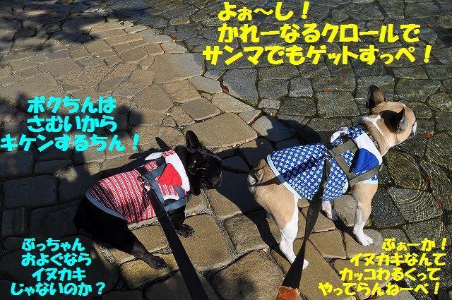 DSC_0463_20161110160056d68.jpg