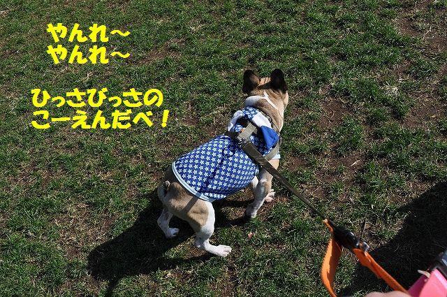 DSC_0471_201611151419533fd.jpg