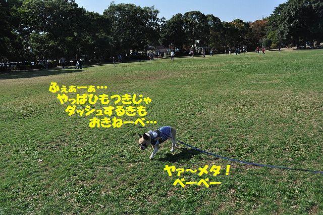 DSC_0477_201611151431090ac.jpg